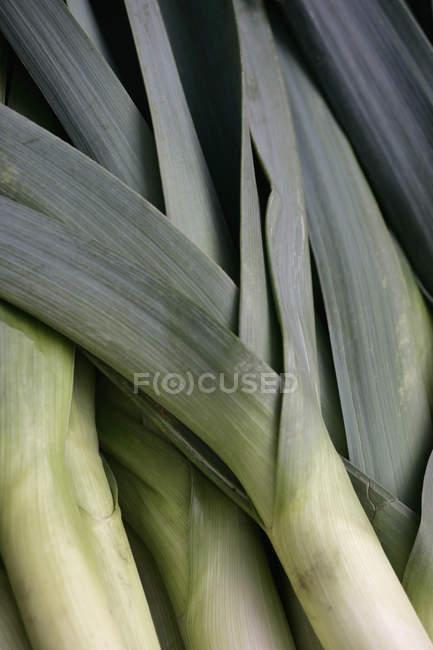 Captura de fotograma completo de puerro maduro verde - foto de stock