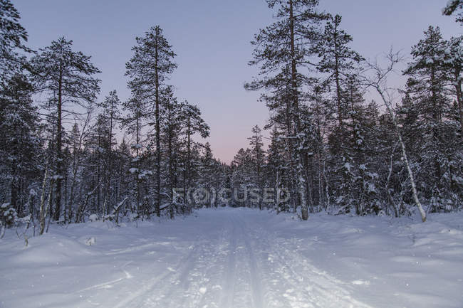 View of road and trees in snowcapped landscape against sky during sunset — Foto stock