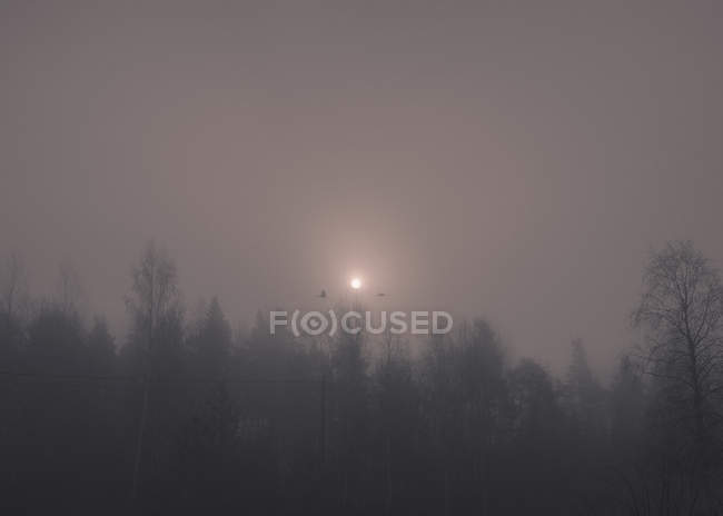 Obscured landscape of trees silhouettes on background of foggy sky with light spot — Stock Photo
