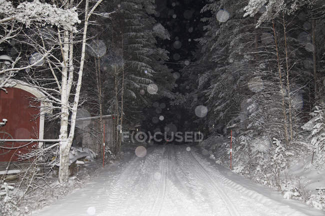 Road amidst trees in snowy weather at night — Stock Photo