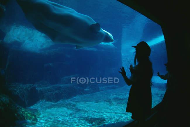 Kinder beobachten Tiere im Aquarium Schwimmen — Stockfoto