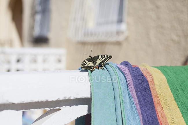 Nahaufnahme des Schmetterlings auf Handtuch an sonnigen Tag — Stockfoto
