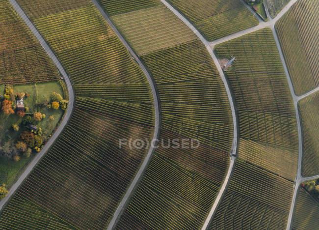 Aerial niedrigen Winkel Blick auf Weinberge zwischen Straßen — Stockfoto
