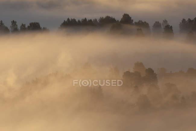 Visión idílica del paisaje cubierto de niebla durante la puesta de sol - foto de stock