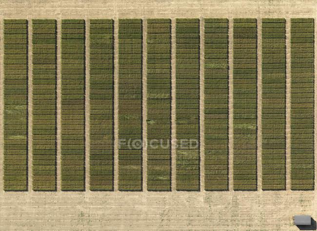 Vista aerea delle colture modellati nel paesaggio agricolo — Foto stock