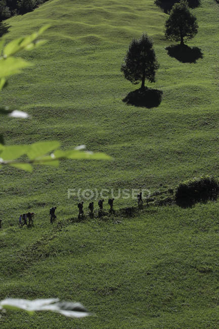 Aerial shot of of green meadow with row of hikers moving through — Stock Photo