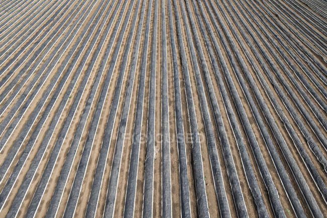 High angle view of plastic covered agricultural field — Stock Photo