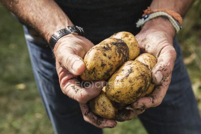Половинка человека держит в руках грязную картошку. — стоковое фото