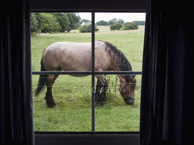 Regardant à travers la vue de la fenêtre à cheval se nourrir dans la Prairie — Photo de stock