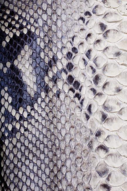 Повний кадр постріл білий зміїної шкіри — стокове фото