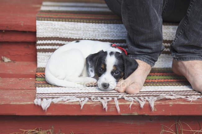 Carino cucciolo appoggiato a piedi nudi — Foto stock