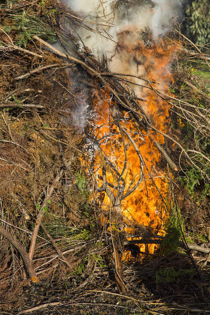 Close up view of trees burning in forest — Stock Photo