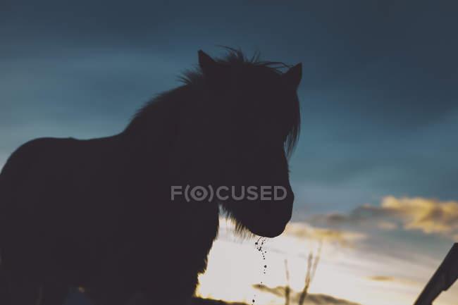 Silhouette horse against sky at dusk — Stock Photo