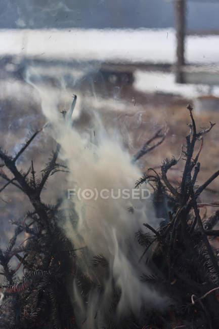Дим випромінюють від спалені гілок — стокове фото