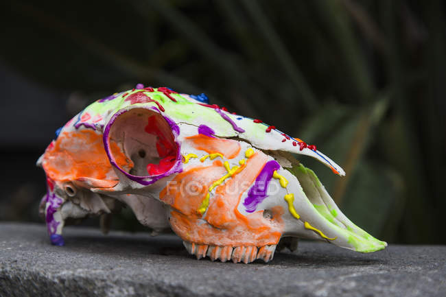 Side view of bright painted animal skull on stone — Stock Photo
