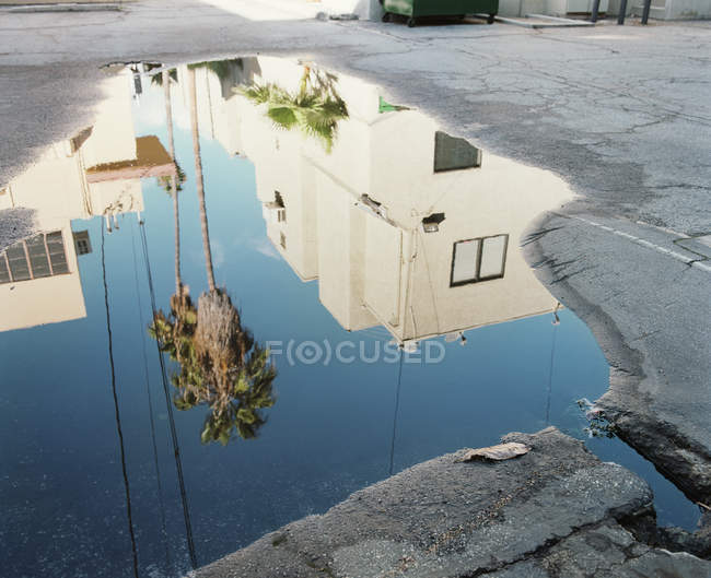 High angle view of palm trees and buildings reflecting in puddle — Stock Photo