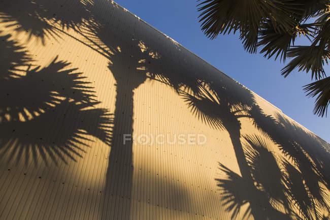 Высокий угол обзора теней пальм на гофрированной стене — стоковое фото
