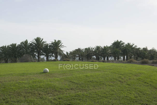 White ball on grassy hill with palm trees in background — Stock Photo