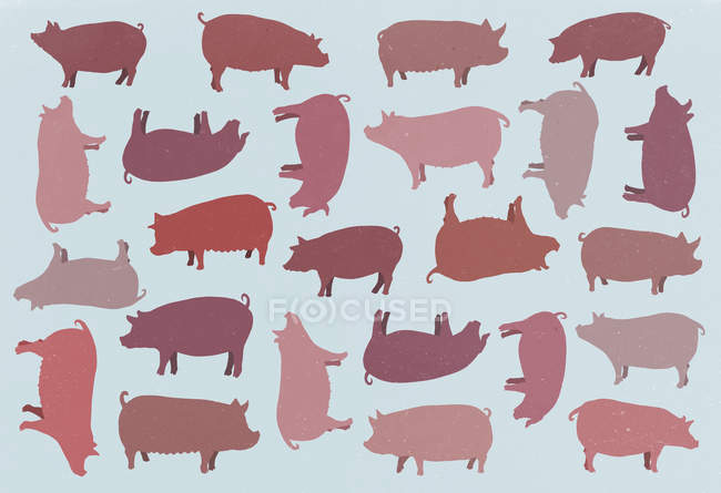 Full frame template of pigs over blue background — Stock Photo