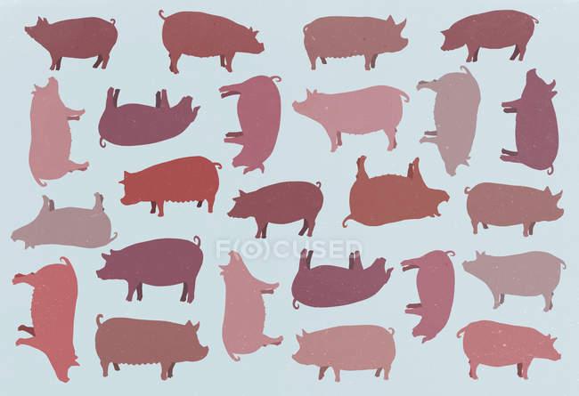 Plantilla de marco completo de cerdos sobre fondo azul - foto de stock