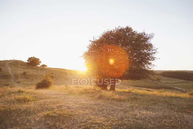Trees on field during sunny day against clear sky — Stock Photo