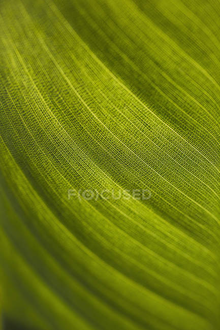 Свежий зеленый лист — стоковое фото