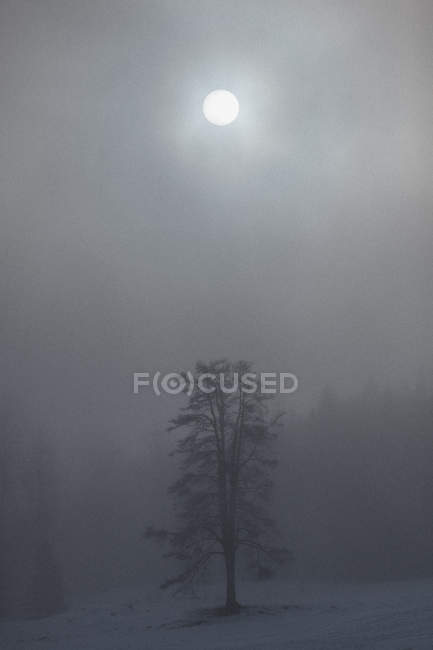 Moon shining over trees on snow covered landscape during foggy weather — Stock Photo