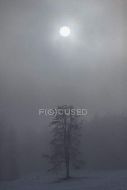 Lua brilhando sobre árvores na paisagem coberta de neve durante o tempo nebuloso — Fotografia de Stock