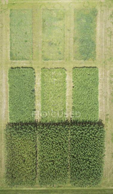 Vista completa telaio aerea delle colture nel paesaggio agricolo — Foto stock