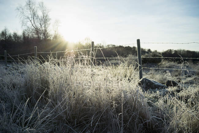 Frozen grass by wire fence against sky on sunny day — Stock Photo
