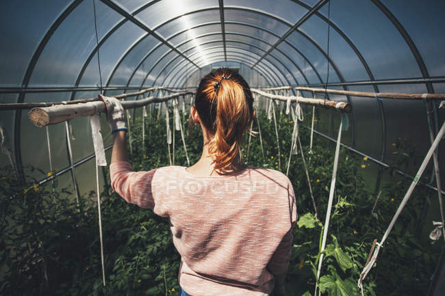 Rear view of woman standing amidst plants in greenhouse — Stock Photo