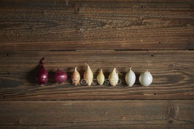 Directamente sobre la vista de cebollas en fila gradiente sobre mesa de madera - foto de stock