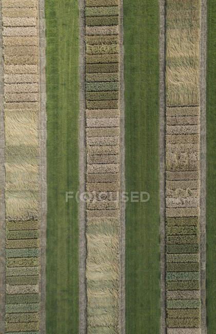 Vollbild-Luftaufnahme von Feldfrüchten in der Agrarlandschaft — Stockfoto