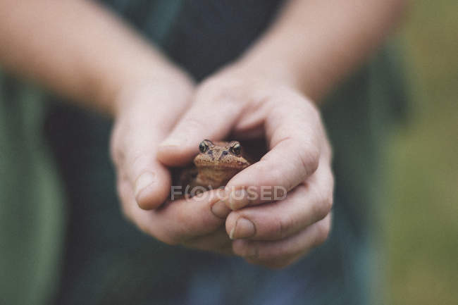 Close up view of cupped hands holding frog — Stock Photo