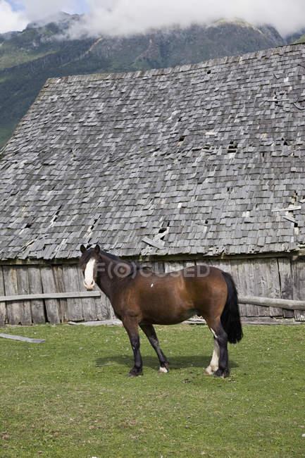 Vue latérale du cheval dans le champ par une grange — Photo de stock