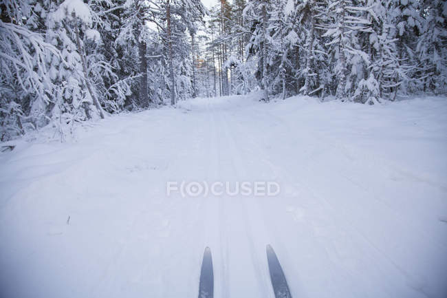 Looking down view of skis in snow covered forest landscape — Stock Photo