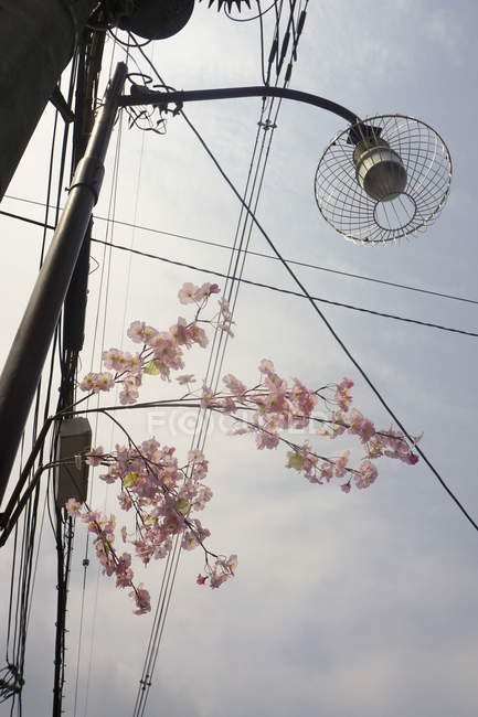 Low angle view of flowers by street light against sky — Stock Photo