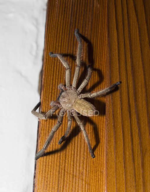 Gros plan vue d'araignée sur la table en bois — Photo de stock