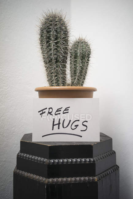 Cactus in pot with free hugs sign on background of white wall — Stock Photo