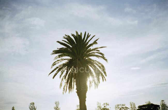 Palme mit Hintergrundbeleuchtung am Himmel — Stockfoto