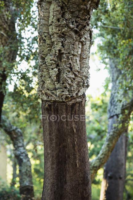 Detalhe do tronco de árvore na floresta — Fotografia de Stock