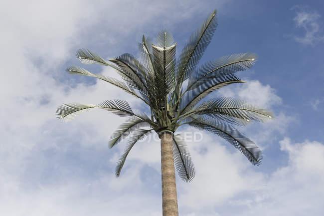 Torre ripetitore cellulare travestita da palma di nuovo cielo — Foto stock