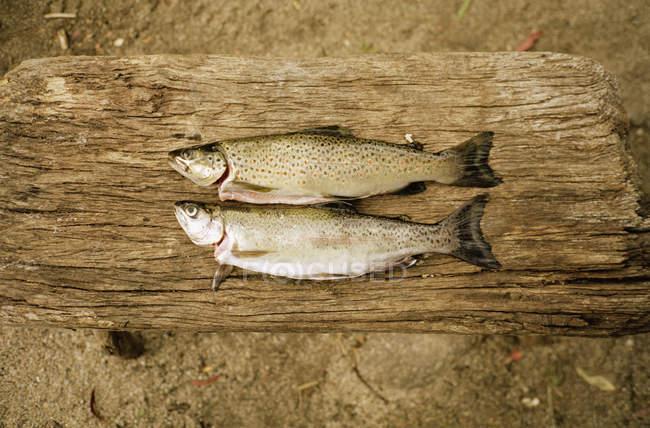 Directamente por encima de la vista de dos peces al lado en mesa de madera - foto de stock