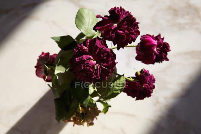 Безпосередньо вище червоні квіти у вазі на стіл — стокове фото