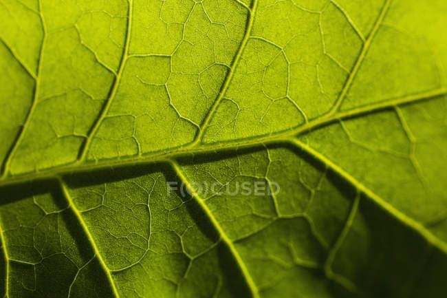Tiro de quadro completo da folha fresco — Fotografia de Stock