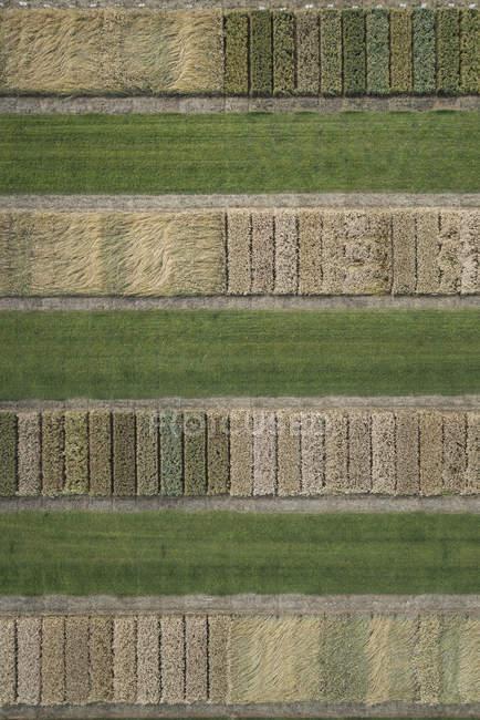 Vista completa telaio aerea delle colture in azienda agricola terre — Foto stock