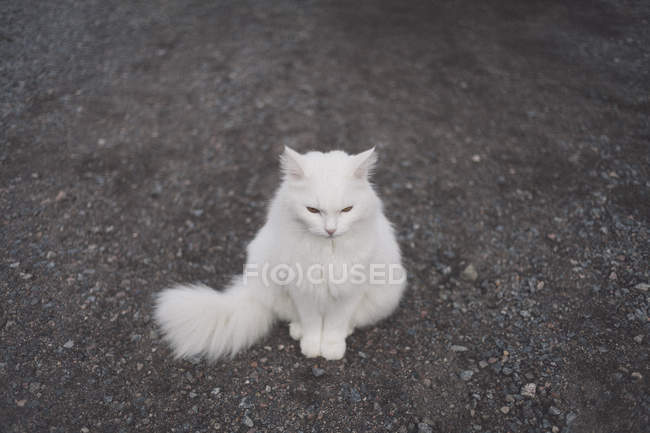 High angle view of white cat sitting on gravel — Stock Photo