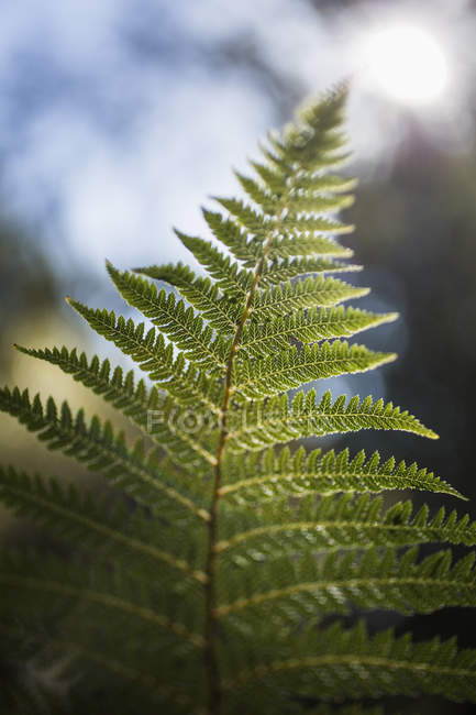 Close-up of green fern branch — Stock Photo