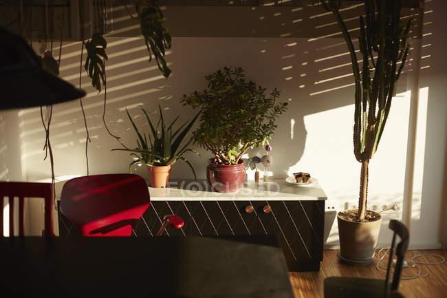 Пестрые растения на шкафу против белой стены дома в солнечный день — стоковое фото