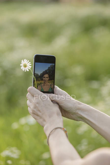 Female hands holding flower and smartphone with reflection of herself on it — Stock Photo